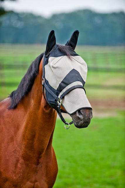 FLY MASK WITH EAR